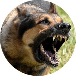 Dog Bite Lawyers | Wolpert Schreiber P.C.